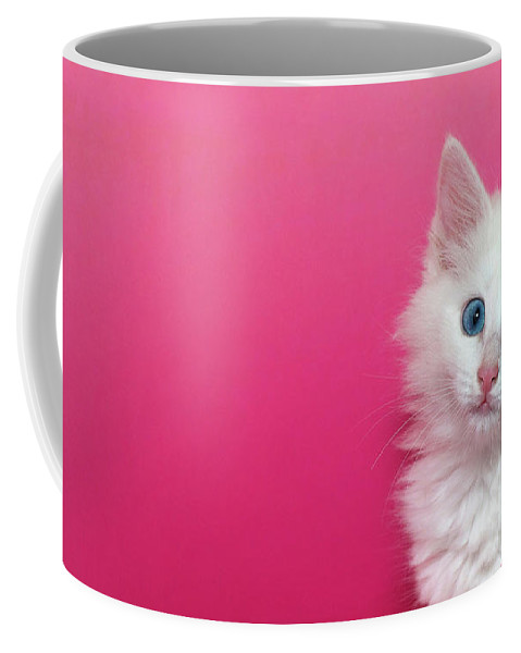 Cat Coffee Mug featuring the photograph Fluffy White Kitten On Pink by Sheila Fitzgerald