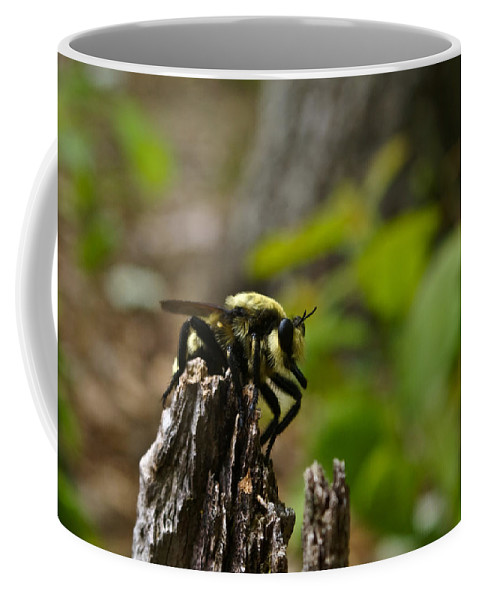 Fly Coffee Mug featuring the photograph Fly on Mountain by Douglas Barnett