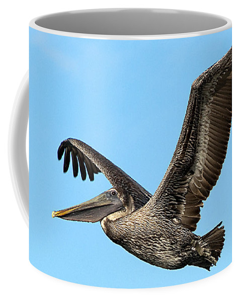 Wildlife Coffee Mug featuring the photograph Flying Brown Pelican by Kenneth Albin