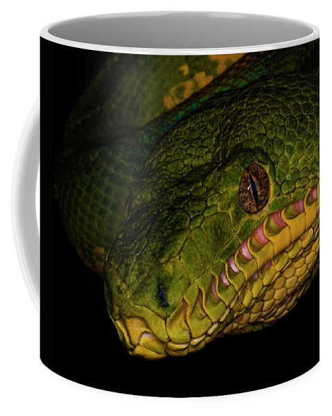 Boa Constrictor Coffee Mug featuring the photograph Focus - A Close Look At An Emerald Boa Constrictor by Mitch Spence