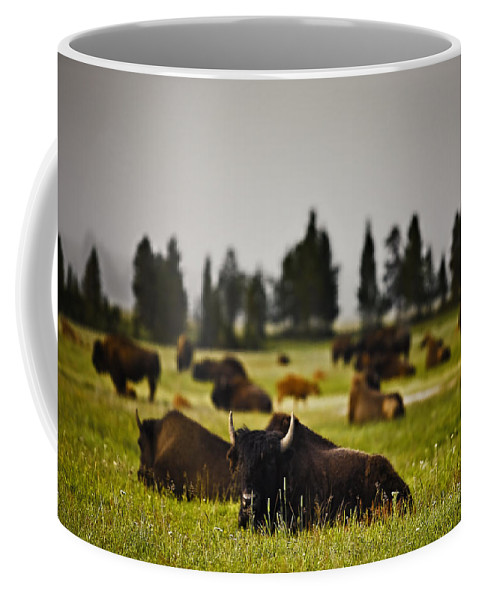 Nature Coffee Mug featuring the photograph Foggy Herd by John K Sampson