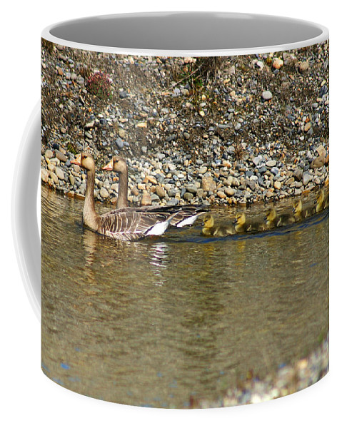 Ducks Coffee Mug featuring the photograph Follow The Leader by Anthony Jones