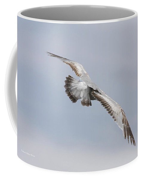 Seagull Coffee Mug featuring the photograph Following The Seagull by Deborah Benoit