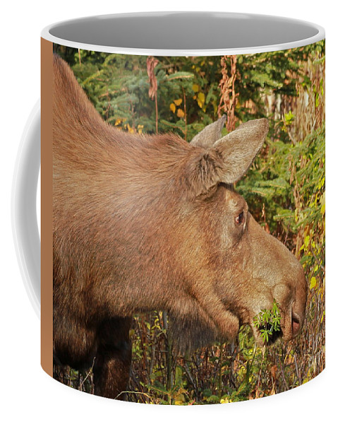 Moose Coffee Mug featuring the photograph Forager by Rick Monyahan