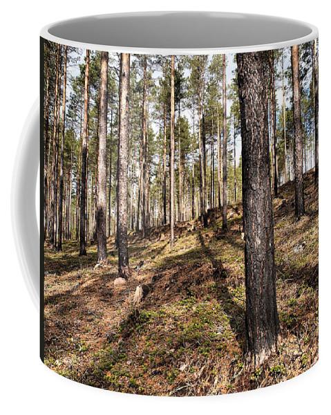 Lehtokukka Coffee Mug featuring the photograph Forest Next Summer After A Fire by Jouko Lehto