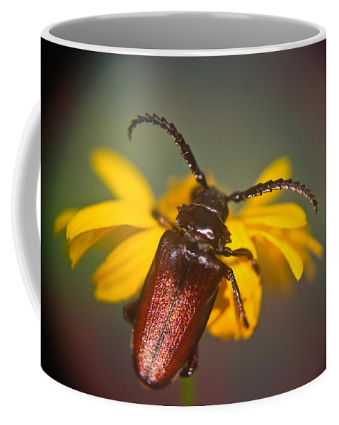 Coleoptera Coffee Mug featuring the photograph Forest Beetle by Douglas Barnett
