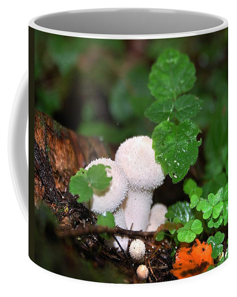 White Coffee Mug featuring the photograph Forest Fairy Tale by Yuri Hope