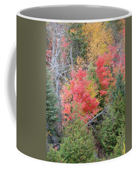 Fall Coffee Mug featuring the photograph Forest Fire by Kelly Mezzapelle
