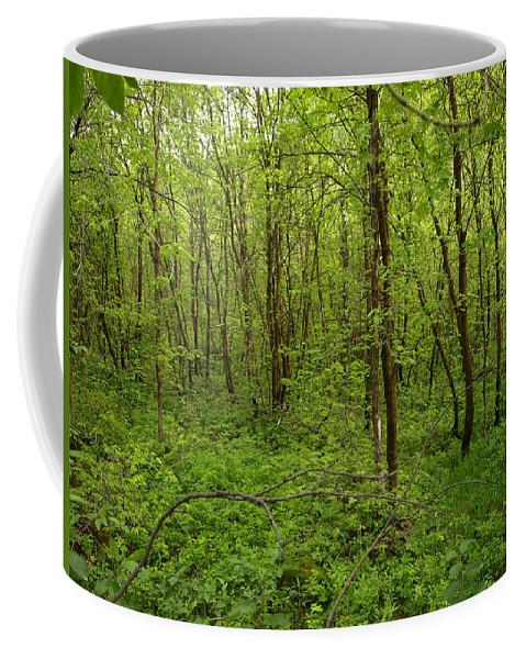 Trees Coffee Mug featuring the photograph Forest Floor by DeeLon Merritt