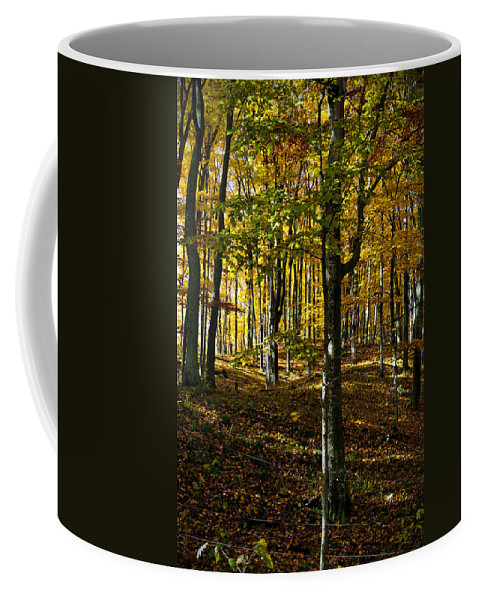 Trees Coffee Mug featuring the photograph Forest Floor Two by Tim Nyberg