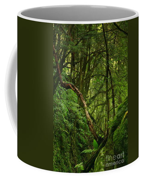 Woodland Coffee Mug featuring the photograph Forest by Gaspar Avila