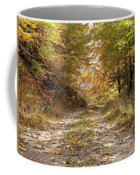 Tree Coffee Mug featuring the photograph Forest Stone Path by Danler Sk