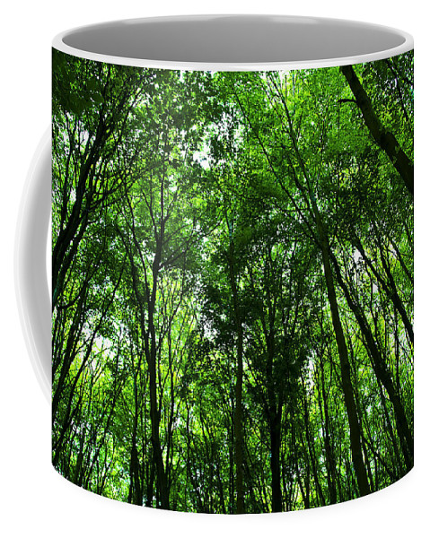 Forest Coffee Mug featuring the photograph Forest by Svetlana Sewell