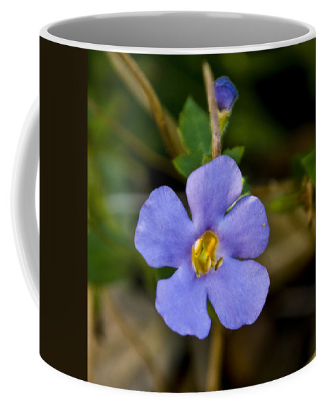 Blue Coffee Mug featuring the photograph Forget Me Not by Svetlana Sewell