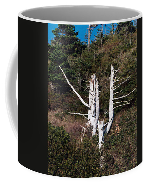 Forms In Nature Coffee Mug featuring the photograph Forms In Nature by Peter Piatt
