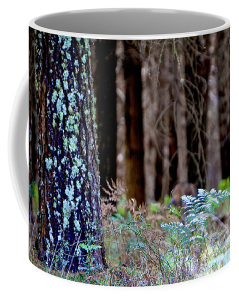 Forrest Coffee Mug featuring the photograph Forrest by Michelle Ngaire