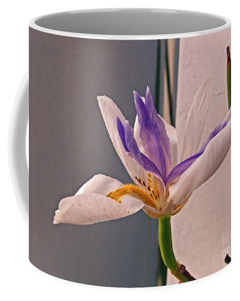 Lily Coffee Mug featuring the photograph Fortnight Lily by Kelly Holm