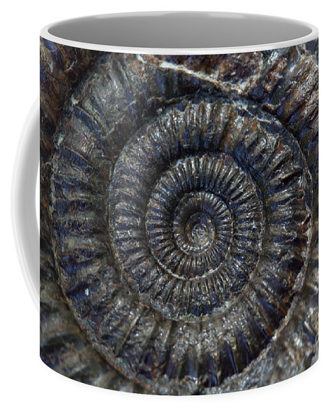 Fossil Coffee Mug featuring the photograph Fossil Ammonite - Dactylioceras by Bruce Block