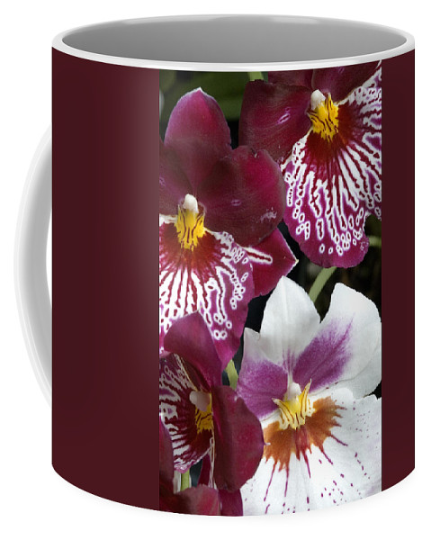 Orchids Coffee Mug featuring the photograph Four Exotic Orchid Blossoms by Todd Gipstein