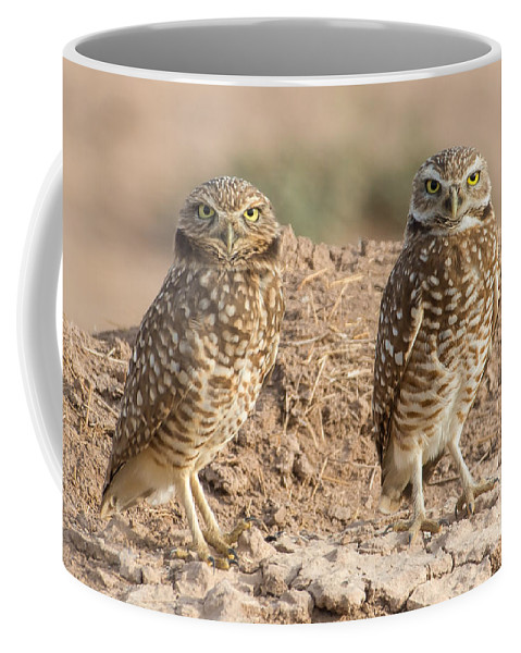 Owl Coffee Mug featuring the photograph Four Eyes by Lisa Manifold