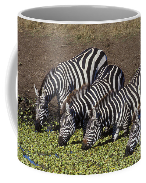 Zebra Coffee Mug featuring the photograph Four For Lunch - Zebras by Sandra Bronstein
