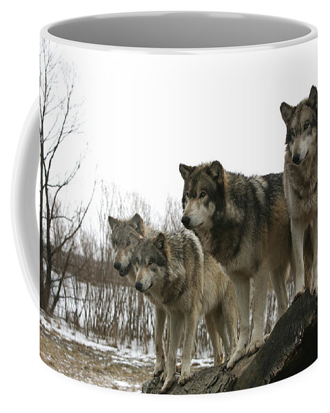 Wolf Wolves Mammals Animals Photography Photograph Winter Wolf Coffee Mug featuring the photograph Four Pack by Shari Jardina