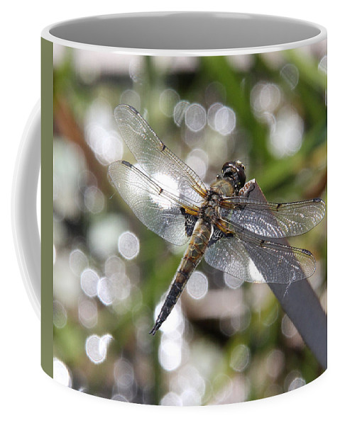 Four-spotted Skimmer Coffee Mug featuring the photograph Four-spotted Skimmer by Doris Potter