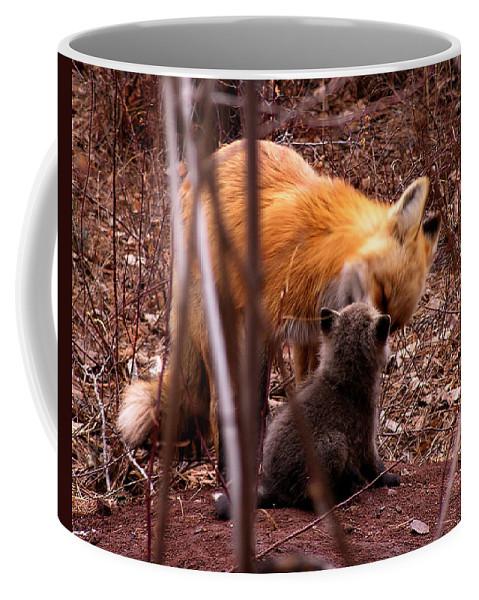 Fox Coffee Mug featuring the photograph Fox by Carol Milisen