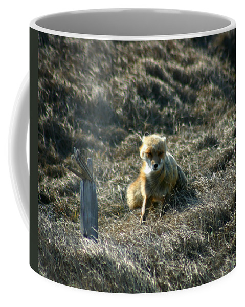 Red Fox Coffee Mug featuring the photograph Fox In The Wind by Anthony Jones