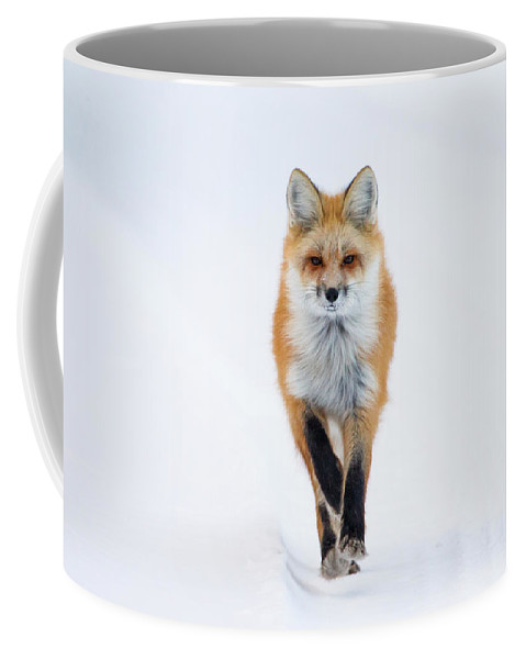 Red Fox Coffee Mug featuring the photograph Fox Trot by Max Waugh