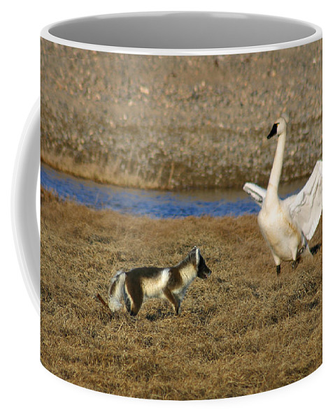 Fox Coffee Mug featuring the photograph Fox Vs Swan by Anthony Jones