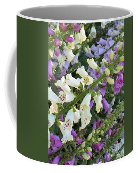 Purple And White Foxglove Coffee Mug featuring the photograph Foxglove Fancy by Carol Groenen