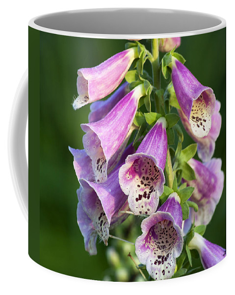 Nature Coffee Mug featuring the photograph Foxglove For Artemis by Kenneth Albin