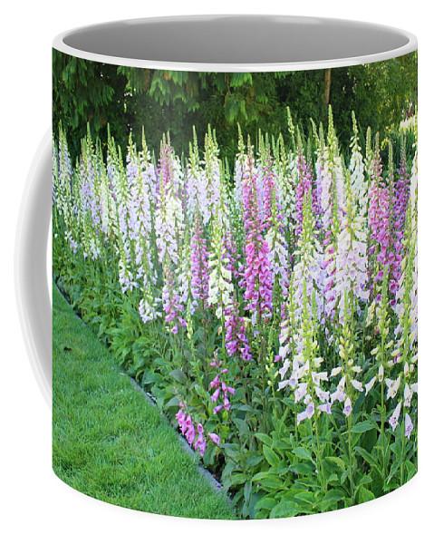 Foxglove Flowers Coffee Mug featuring the photograph Foxglove Garden by Carol Groenen