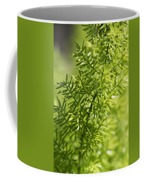 Cedar Park Coffee Mug featuring the photograph Foxtail Fern In Spring by JG Thompson