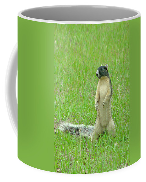 Fox Squirrel Coffee Mug featuring the photograph Foxy by Adele Moscaritolo