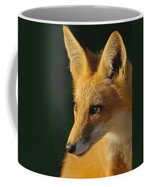Fox Coffee Mug featuring the photograph Foxy Lady by William Jobes