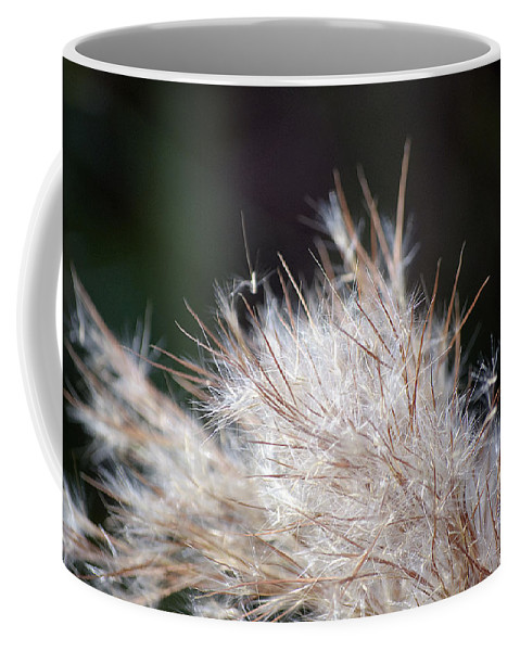 Weed Coffee Mug featuring the photograph Fragile Seeds by Kenneth Albin