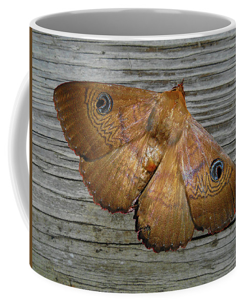 Moth Coffee Mug featuring the photograph Frederica by Mark Blauhoefer