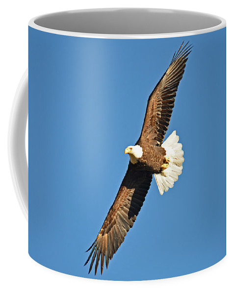 Bald Eagle Coffee Mug featuring the photograph Free Flying by Regine Brindle