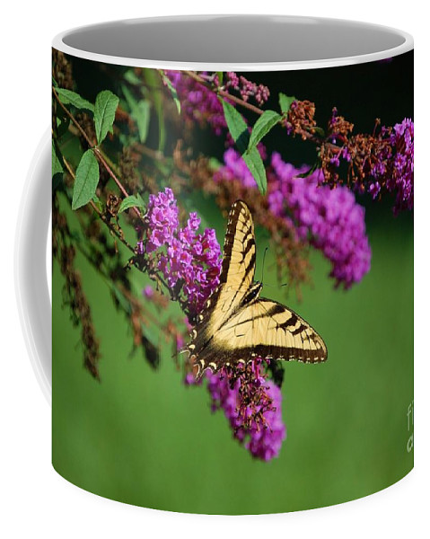 Butterfly Coffee Mug featuring the photograph Freedom by Debbi Granruth