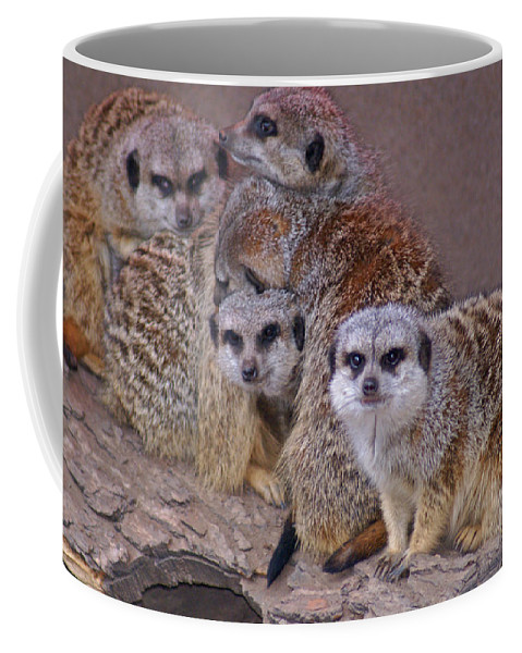 Mer Cats Coffee Mug featuring the photograph Freezing Meer Cats by Heather Coen