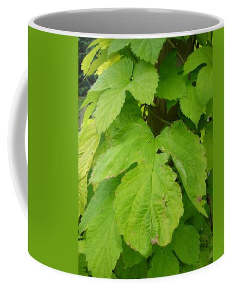 Hop Coffee Mug featuring the photograph Fresh English Golden Hop by Susan Baker