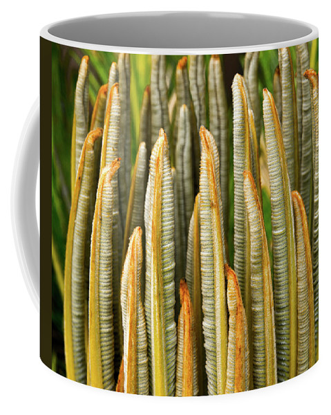 Cycad Coffee Mug featuring the photograph Fresh Fronds by Christopher Holmes