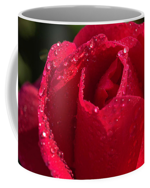 Rose Coffee Mug featuring the photograph Fresh Rose by Keith Smith