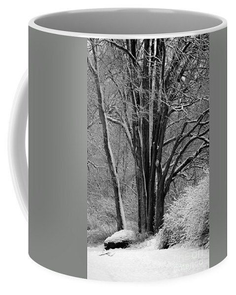 Fresh Snow Coffee Mug featuring the photograph Fresh Snow by Carol Groenen