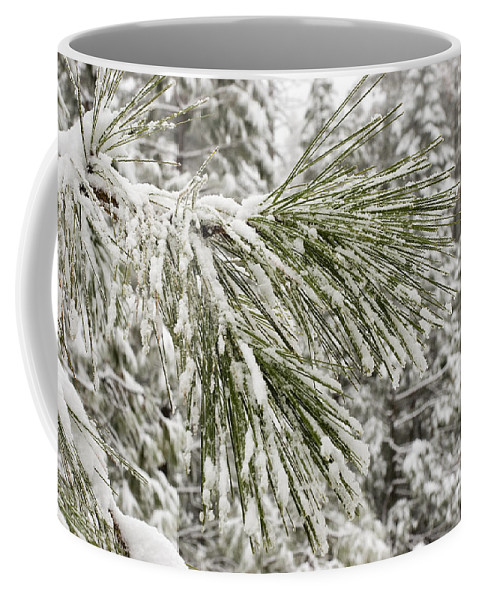 Yosemite National Park Coffee Mug featuring the photograph Fresh Snow Covers Needles On A Pine by Charles Kogod