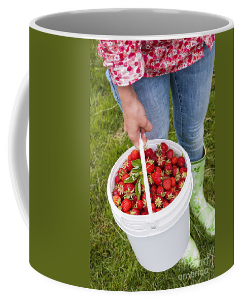 Strawberries Coffee Mug featuring the photograph Fresh Strawberries by Elena Elisseeva