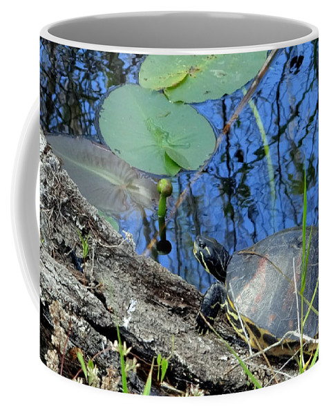 Everglades Coffee Mug featuring the photograph Freshwater Turtle Sunning by Edie Ann Mendenhall
