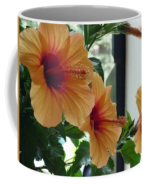 Photography Flower Floral Bloom Hibiscus Peach Coffee Mug featuring the photograph Friends For A Day by Karin Dawn Kelshall- Best